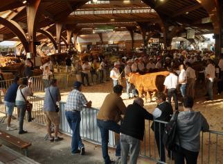 Vue d'ensemble du festival de l'élevage Brive 2017