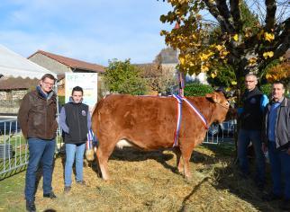 Vache vendue à la vente aux enchères aux Journées de la Limousine en Octobre 2016